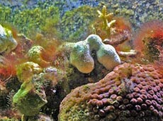 Coral Reef Picture