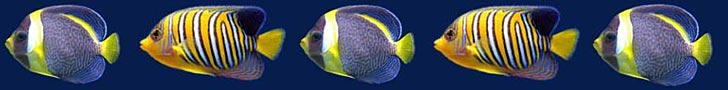 Angel Fish Image