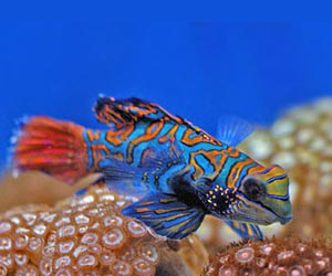 Marine Fish Picture