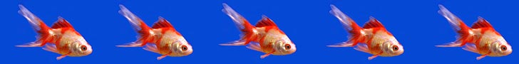 Pet Fish Image