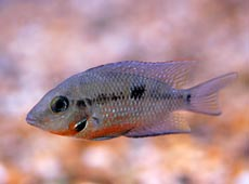 Tropical Fish Species